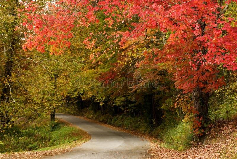 beaux arbres courbants de route d'automne images stock
