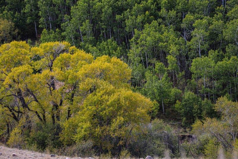 Beaux arbres d'automne au Wyoming photo stock