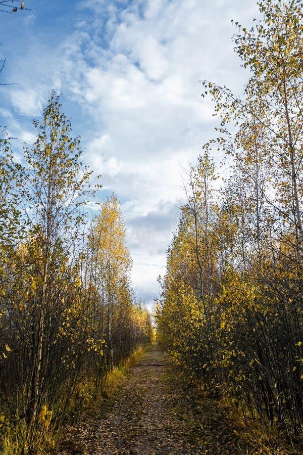 Beaux arbres de feuilles d'automne avec le regard de beaux-arts fond mou coloré de paysage d'automne Thème saisonnier Automne d'a photo libre de droits