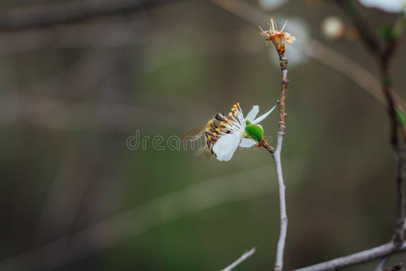 Beaux arbres de floraison au printemps un jour ensoleillé photos stock