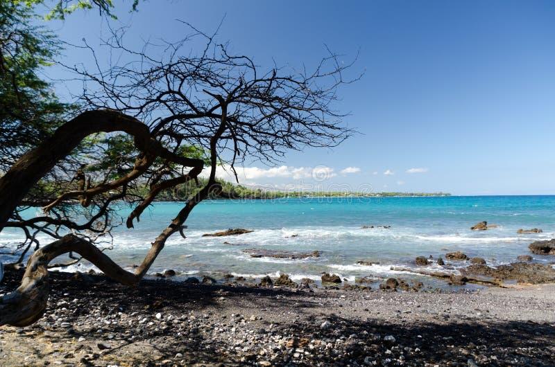 Beaux arbres de kiawe encadrant la s?r?nit? de la plage de Waialea image stock