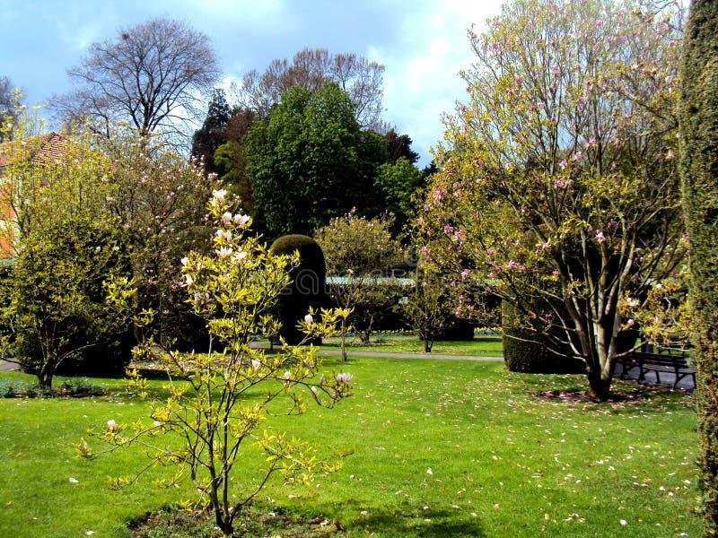 Beaux arbres de magnolia dans le jardin formel en parc public au printemps à Stuttgart, l'Allemagne, l'Europe image libre de droits