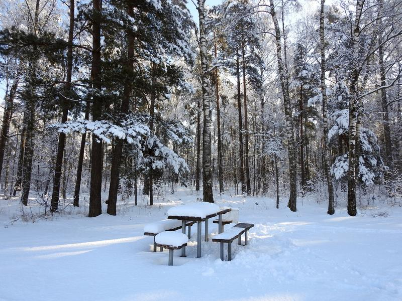 Beaux arbres et lieu de repos d'hiver dans la forêt, Lithuanie photo libre de droits