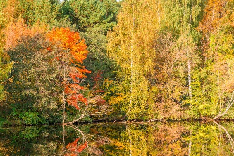Beaux arbres lumineux d'automne près du lac en parc, paysage scénique images stock