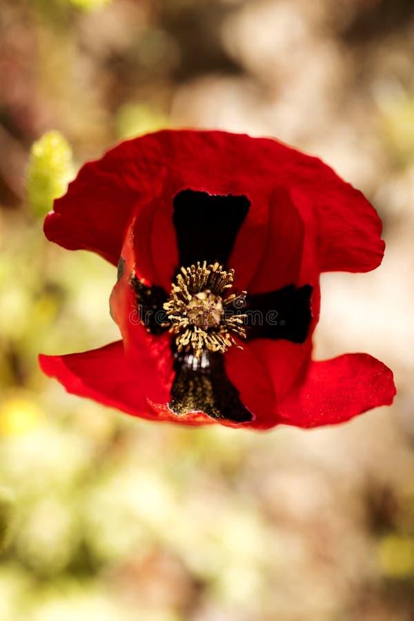 Beaux-arts de fond de fleur de pavot macro dans les produits de haute qualit? 50,6 Megapixels d'impression images stock