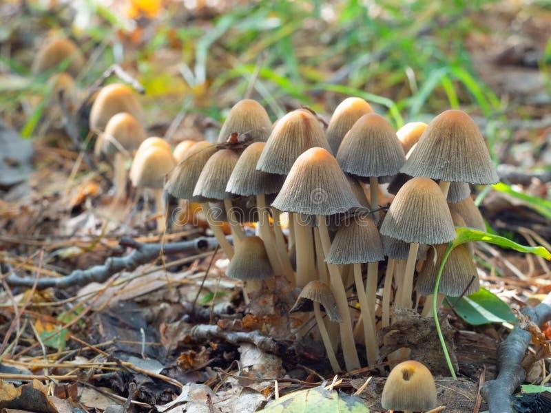 Beaux champignons dans la forêt image libre de droits
