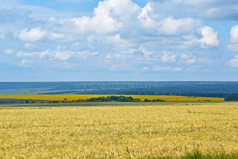 Beaux champs colorés d'avoine et de tournesols contre photographie stock