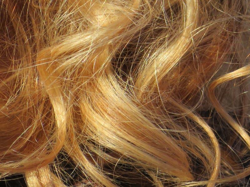 Beaux cheveux blonds d'une couleur intense et très bien toilettés photo libre de droits