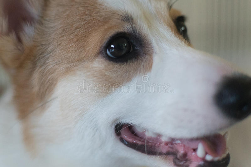 Beaux chiens photographie stock