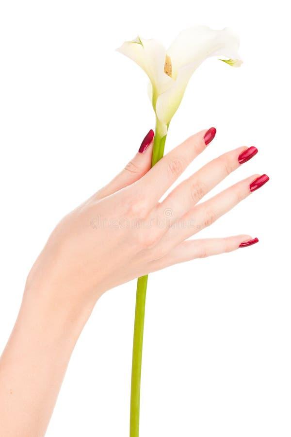 Beaux clous et doigts avec la fleur photos libres de droits