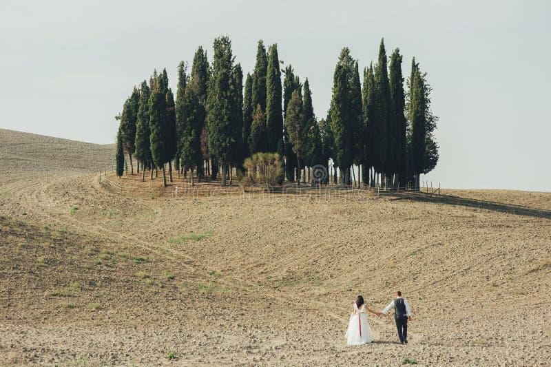 Beaux couples de mariage, jeunes mariés sur le champ de blé avec du Cl image libre de droits
