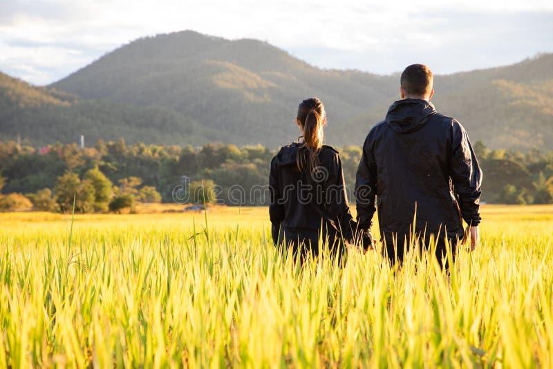 Beaux couples de voyageur sur les gisements jaunes de riz en Thaïlande photographie stock libre de droits