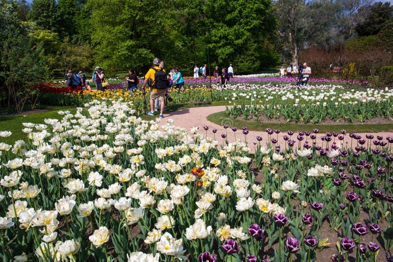 Beaux divers genres de tulipes dans le jardin botanique de la villa Tarente dans Pallanza, Verbania, Italie photos stock