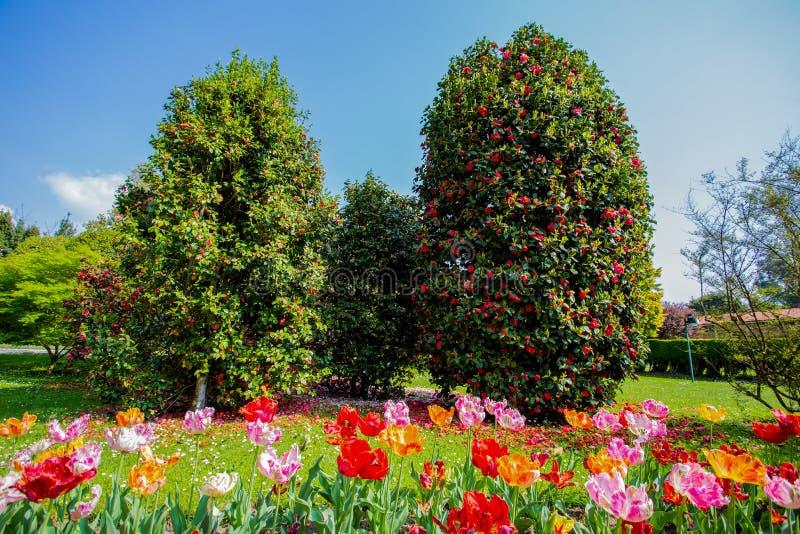 Beaux divers genres de tulipes dans le jardin botanique de la villa Tarente dans Pallanza, Verbania, Italie photo stock