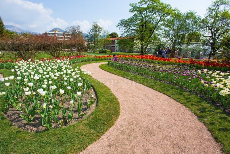 Beaux divers genres de tulipes dans le jardin botanique de la villa Tarente dans Pallanza, Verbania, Italie photo libre de droits