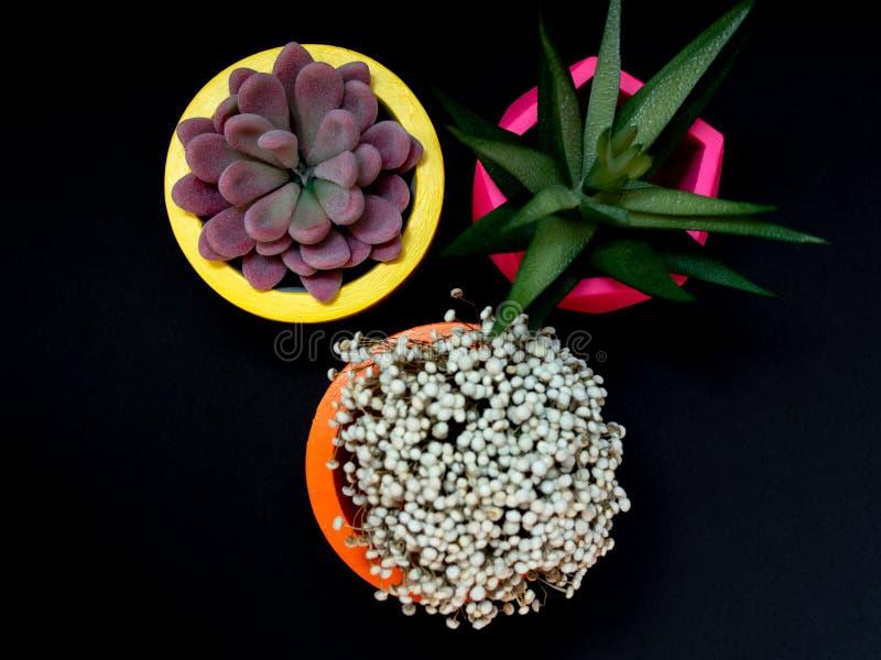 Beaux divers planteurs concrets géométriques avec le cactus, la fleur et la plante succulente Pots concrets peints colorés pour l image libre de droits