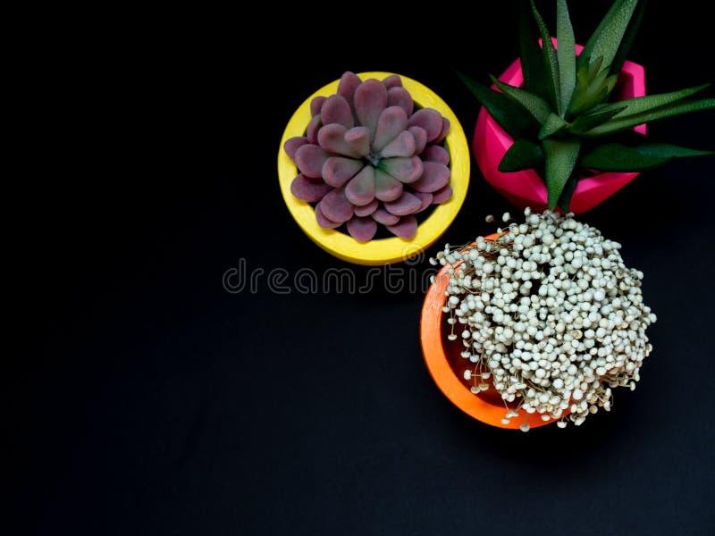 Beaux divers planteurs concrets géométriques avec le cactus, la fleur et la plante succulente Pots concrets peints colorés pour l photo stock