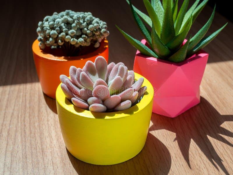 Beaux divers planteurs concrets géométriques avec le cactus, la fleur et la plante succulente Pots concrets peints colorés pour l photos stock