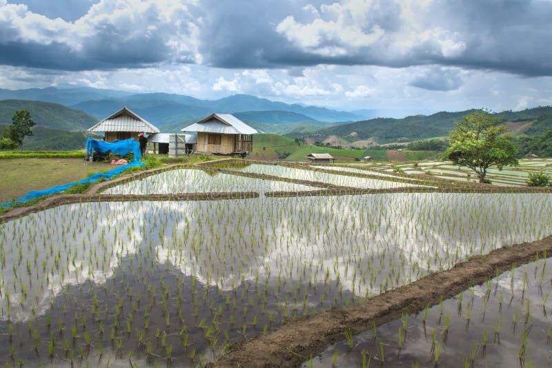 Beaux gisement et hutte de riz de terrasse de paysage dans Chiangmai thaïlandais images stock