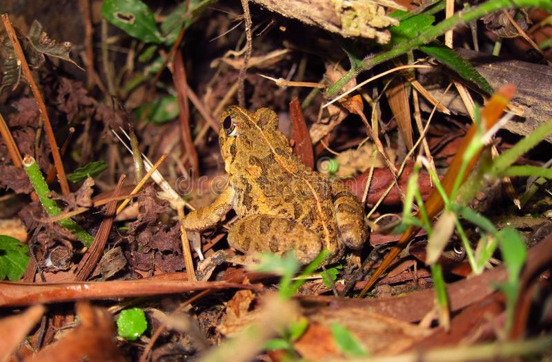 Beaux grenouilles et animaux sauvages de la vie images stock