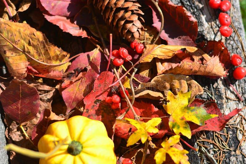 beaux milieux d'automne images libres de droits