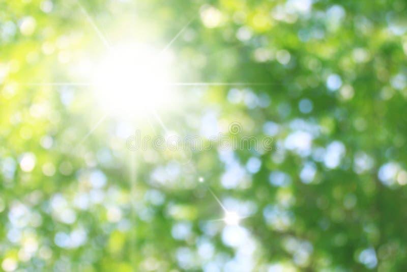 Beaux milieux verts éclatants avec le soleil allumant l'effet vert de bokeh de forêt de nature sur le fond de scintillement de ve photos libres de droits