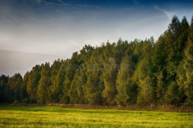 Download Beaux Nuages Blancs Au-dessus De La Forêt Et Du Champ Image stock - Image du couleur, forêt: 77152473