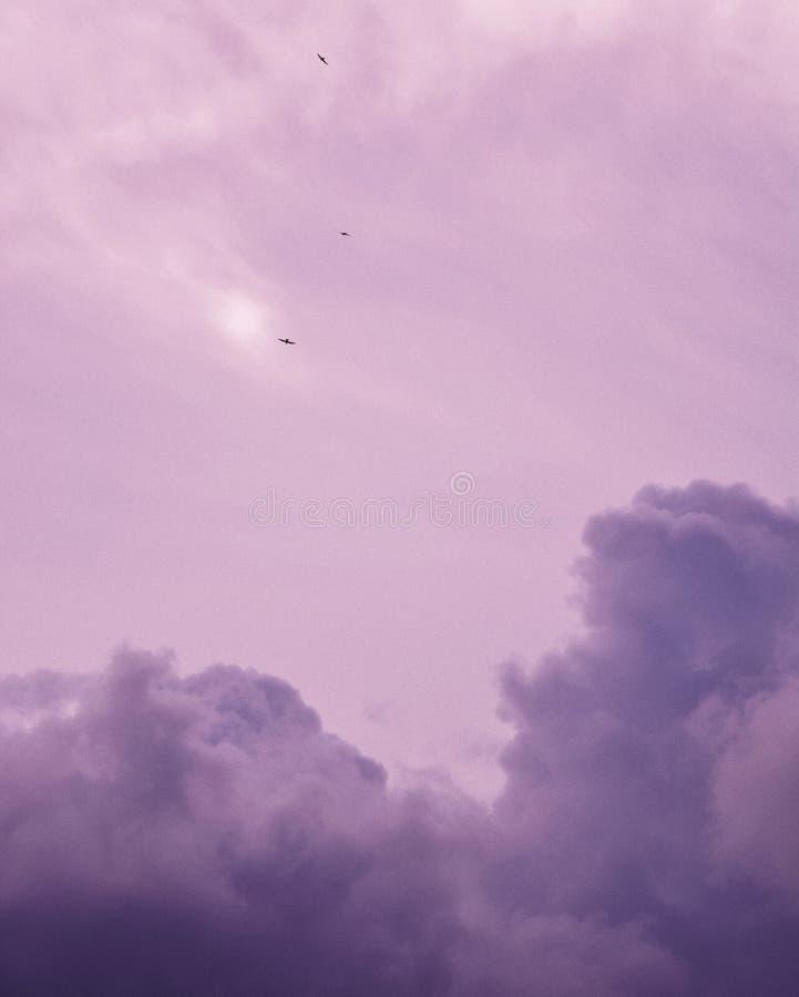 Beaux nuages bleus pourpres et un ciel nuageux avec des oiseaux volant en haut photos libres de droits