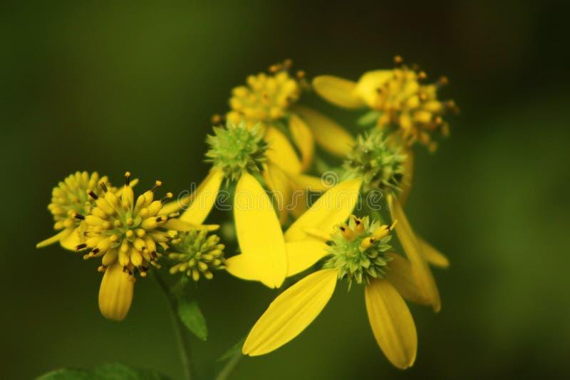 beaux pétales jaunes photographie stock