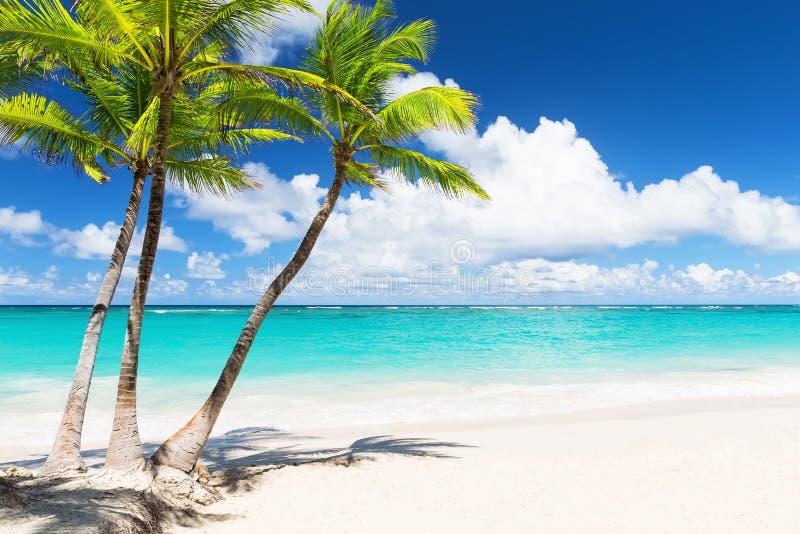Beaux palmiers blancs tropicaux de plage et de noix de coco images stock