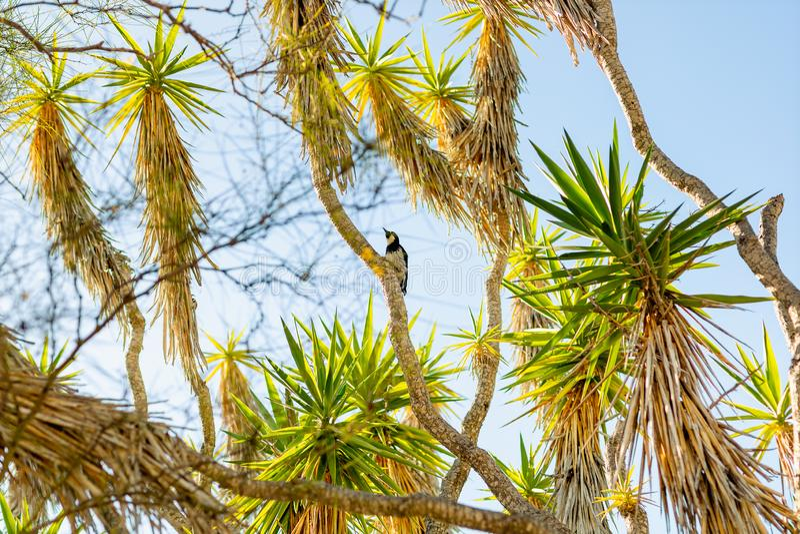 Beaux palmiers, oiseau, et ciel bleu clair image stock