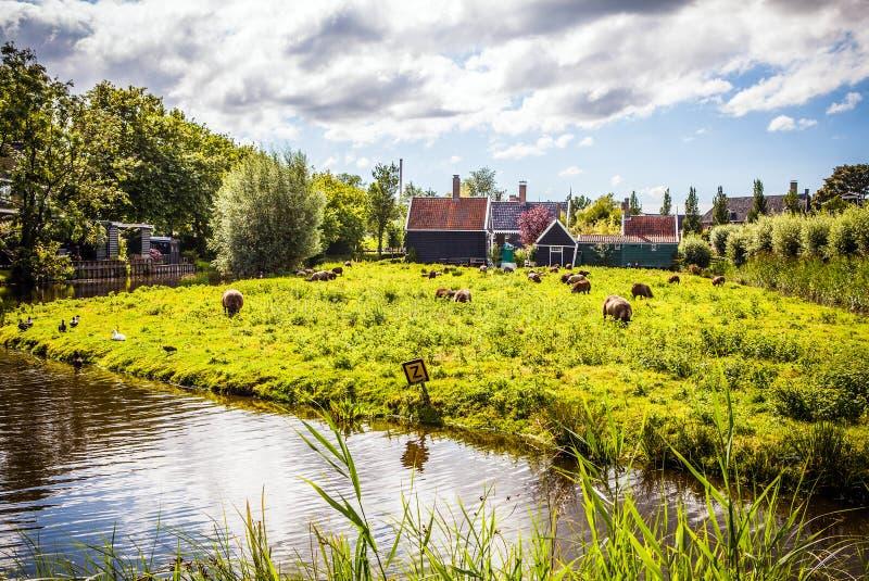 Beaux paysage, canaux et bâtiments néerlandais traditionnels images stock