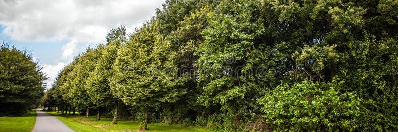 Beaux paysage et nature néerlandais traditionnels Panorama photos libres de droits