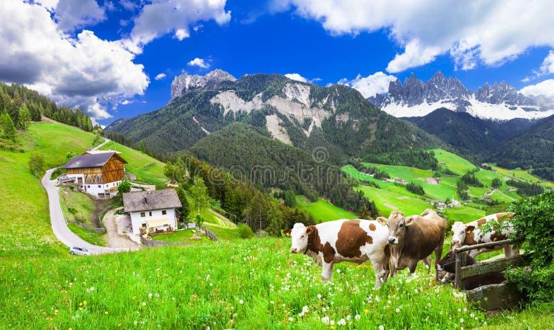 Beaux paysages de nature - pâturages des dolomites images stock
