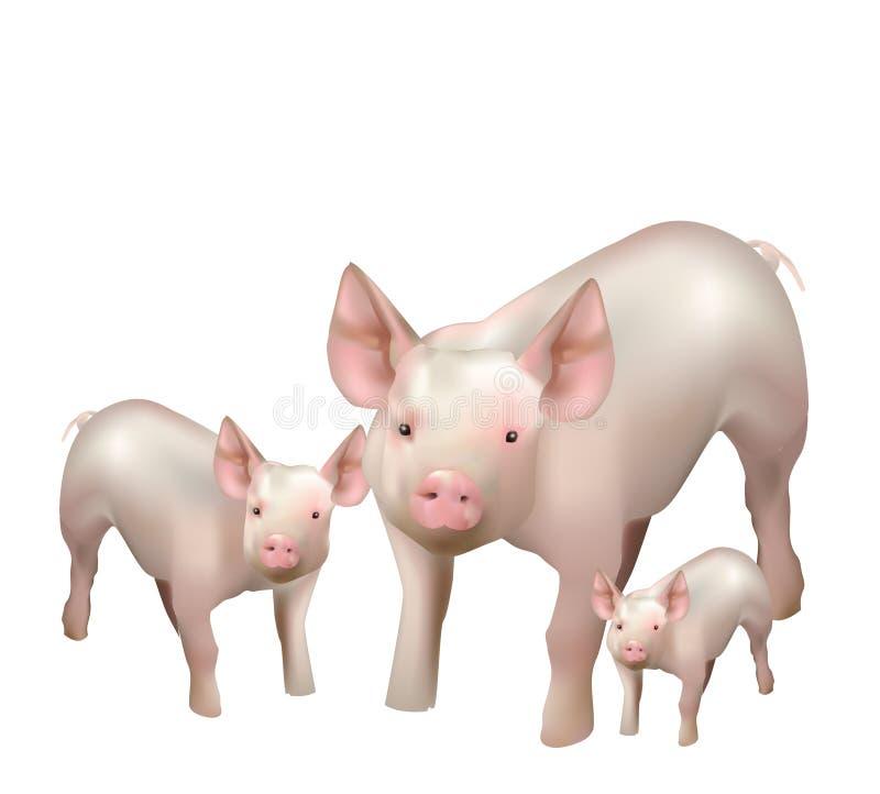 Beaux petits porcs illustration stock