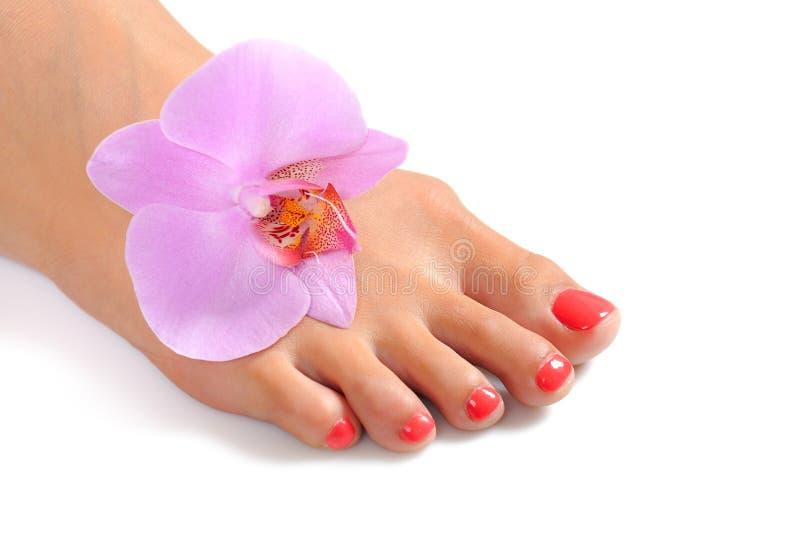Beaux pieds de patte avec le pedicure parfait de station thermale photo libre de droits