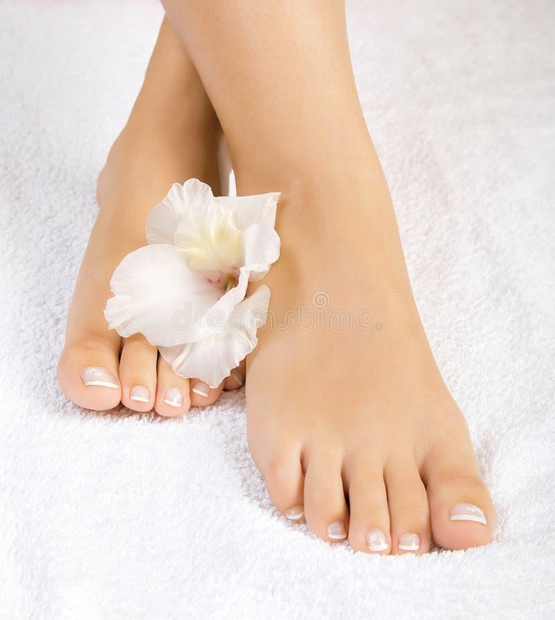 Beaux pieds femelles image stock