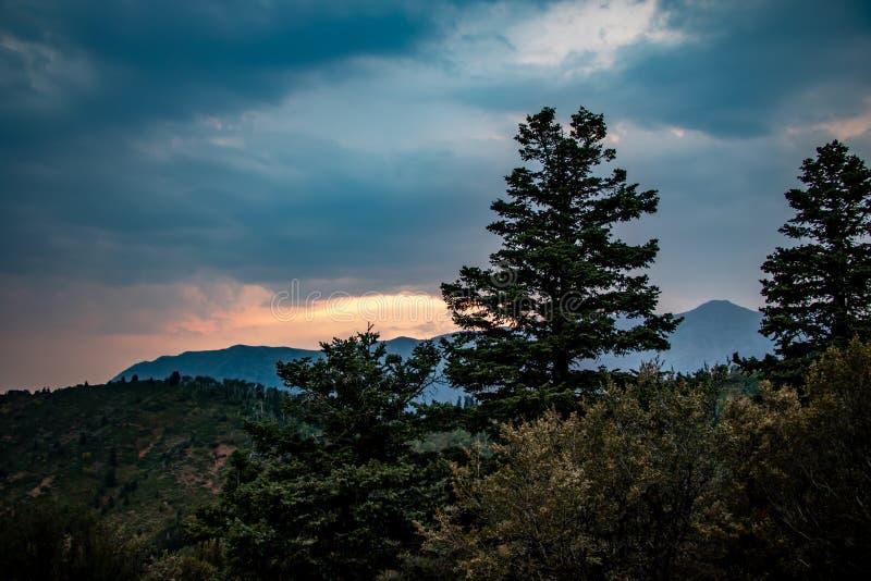 Beaux pins dans les mountians au coucher du soleil photo stock