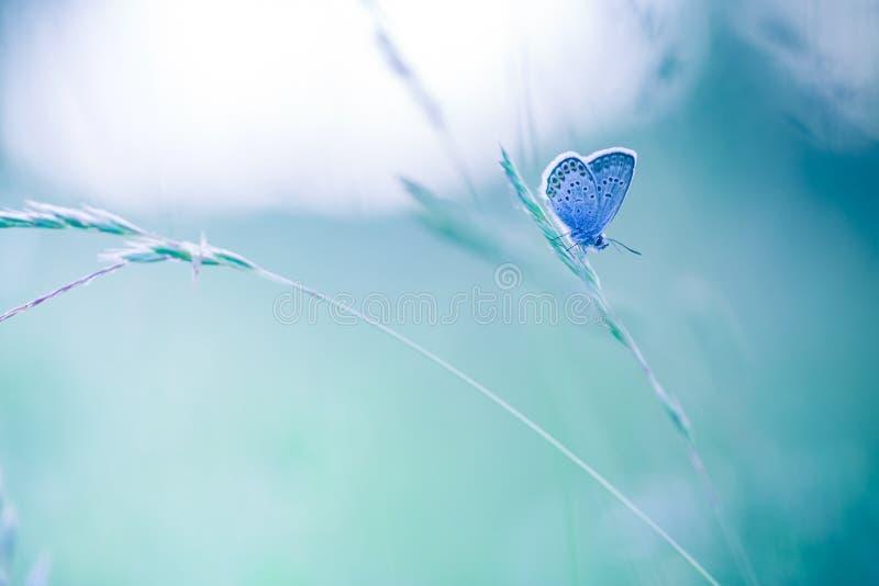 Beaux plan rapproché de nature, fleurs d'été et papillon sous la lumière du soleil Fond calme de nature images stock