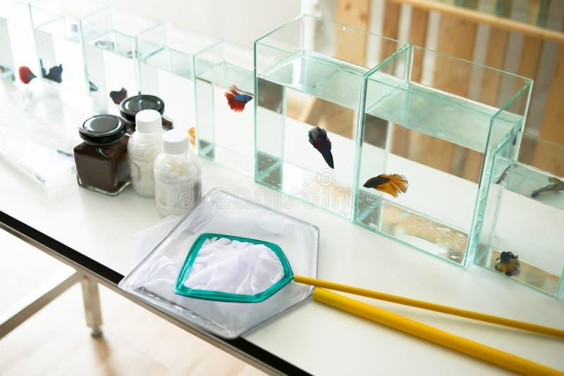Beaux poissons siamois de betta dans le verre et l'eau près de l'equipme image libre de droits