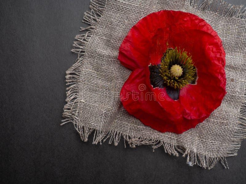 beaux poppys rouges d'isolement sur un fond noir, carte postale avec l'espace de copie photos stock