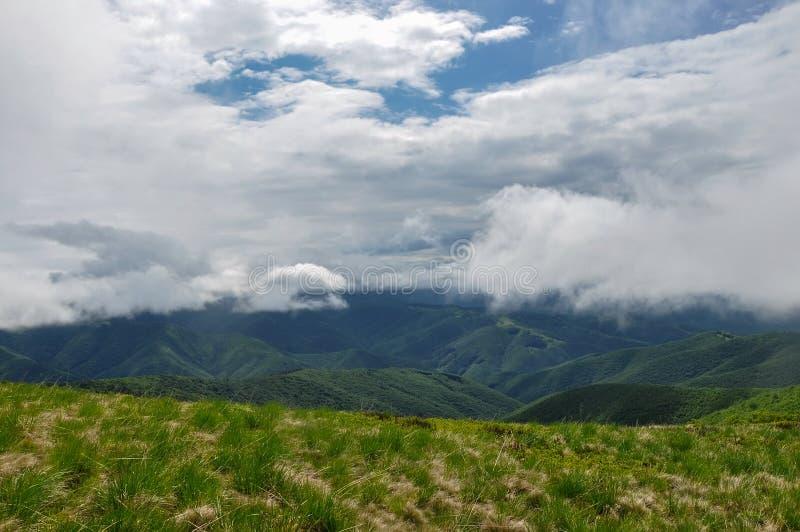 Beaux prés verts sur les montagnes carpathiennes photo stock