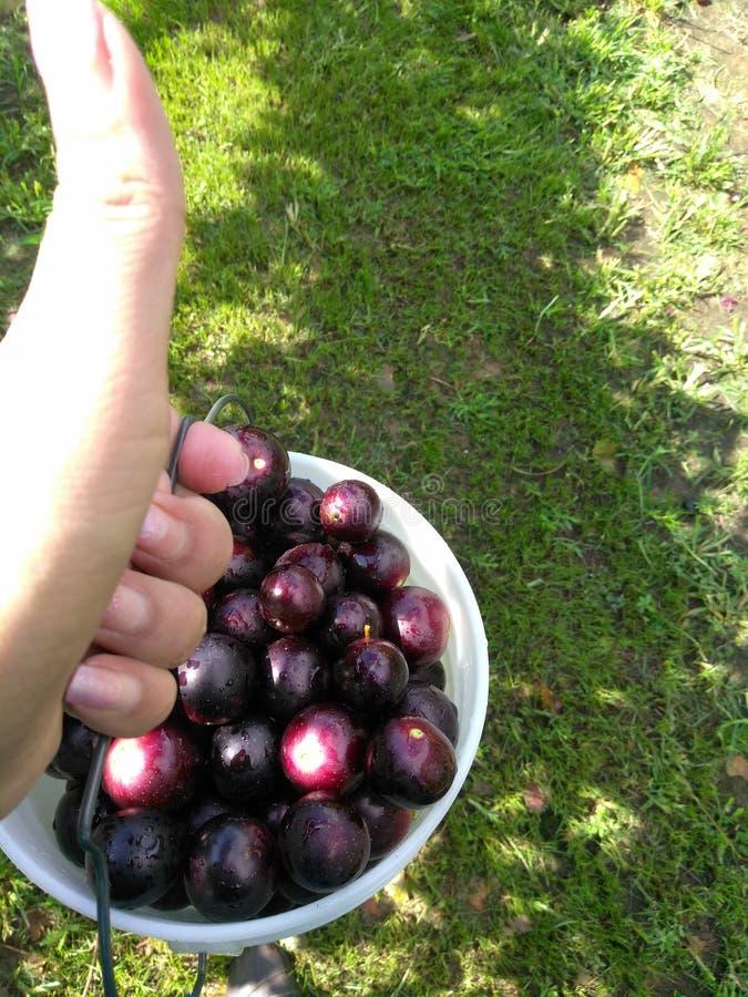 Beaux raisins juteux photo libre de droits
