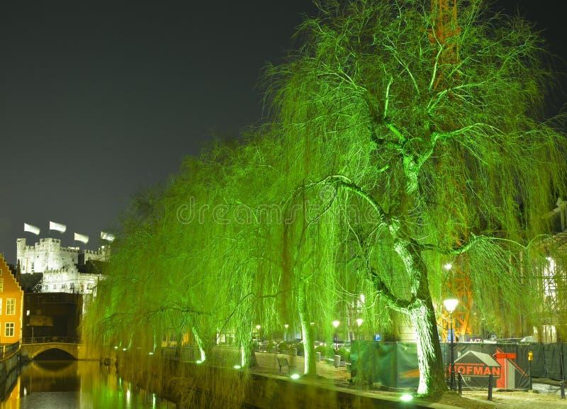 Beaux saules illuminés la nuit photographie stock libre de droits