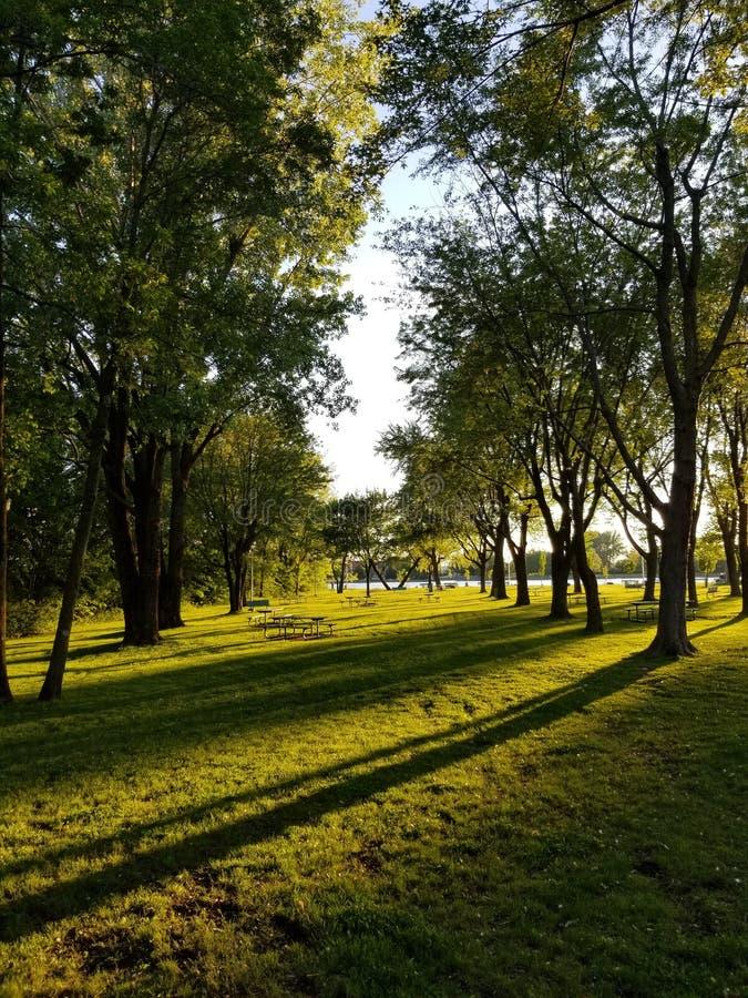 Beaux verts verts d'arbres de park parc de grands d'arbres photos libres de droits