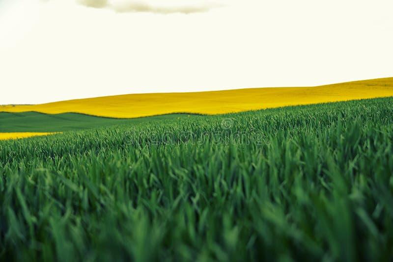 Beaux vue colorée des usines de floraison de graine de colza et rural photos libres de droits