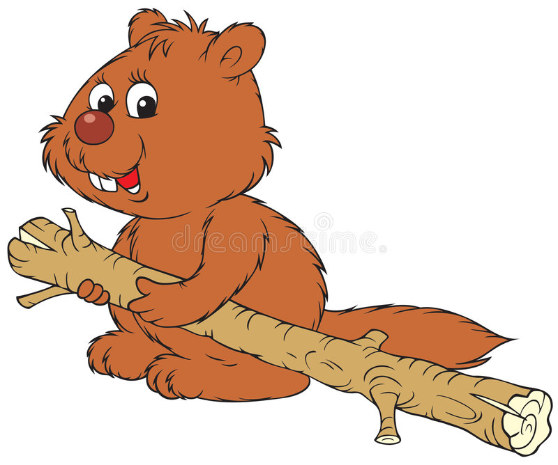 Beaver royalty free illustration