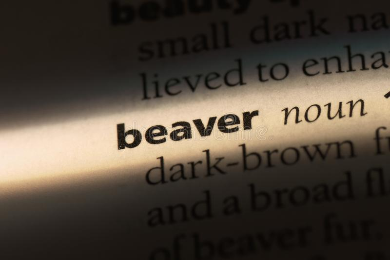 Beaver. Word in a dictionary.  concept royalty free stock image