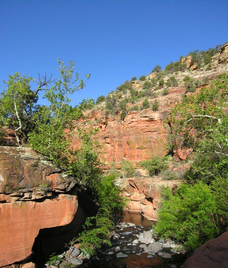 Beaver Creek molhado imagem de stock royalty free