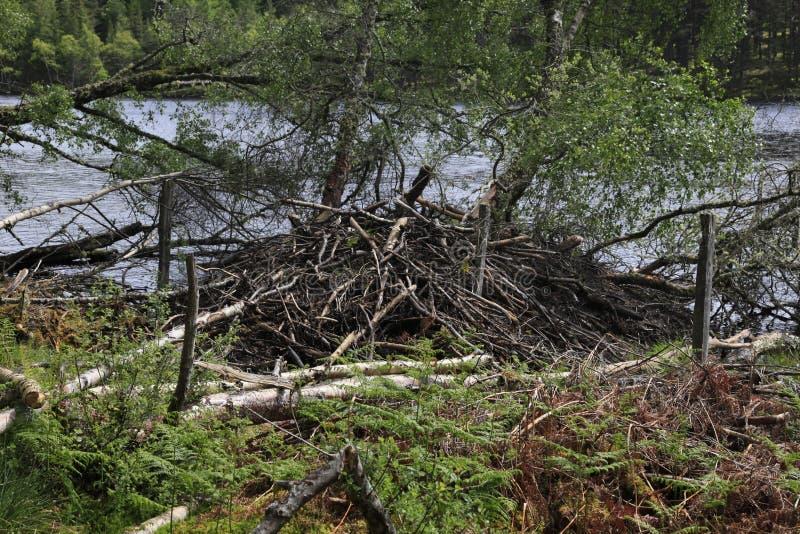 Download Beaver Damage Royalty Free Stock Photos - Image: 20171908